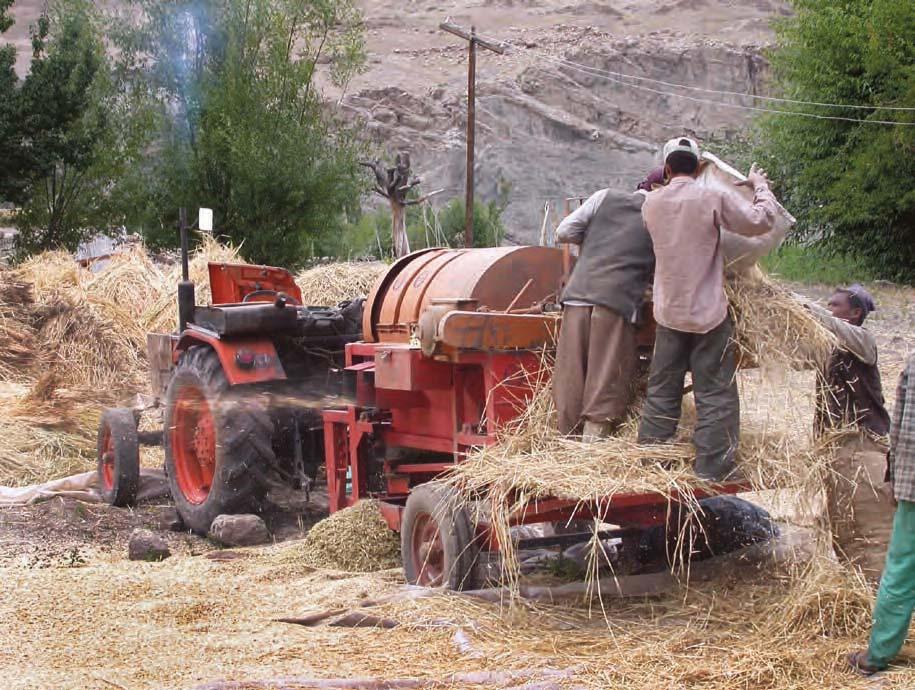 Harvest in Alchi