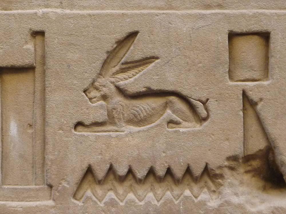 Stony faced Egyptian hare
